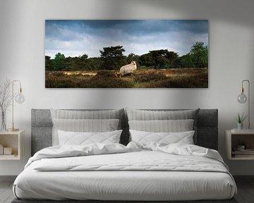 Het schaap en zijn lam | Groote Zand van Ricardo Bouman