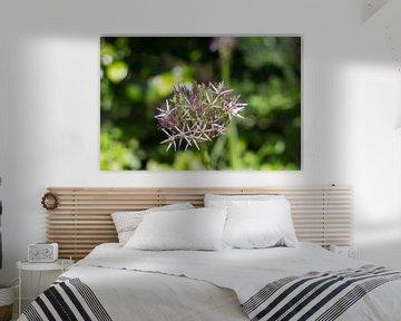 Paars-witte bloem