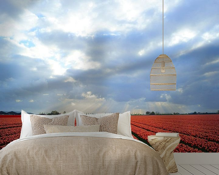 Sfeerimpressie behang: Bollenveld met rode tulpen van Michel van Kooten