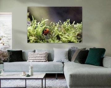 Kikkertje in het mos van Klaase Fotografie