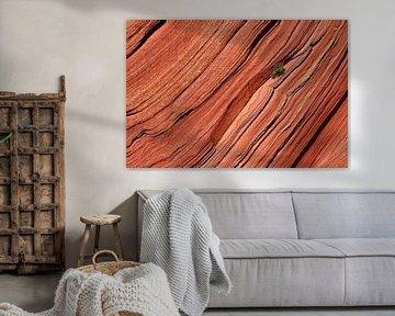boompje op een rotswand van Antwan Janssen