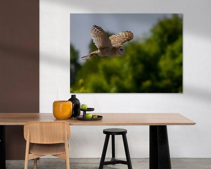 Impression: Barn owl sur noeky1980 photography