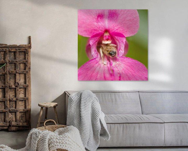 Impression: A bee inside a Impatiens glandulifera flower sur noeky1980 photography