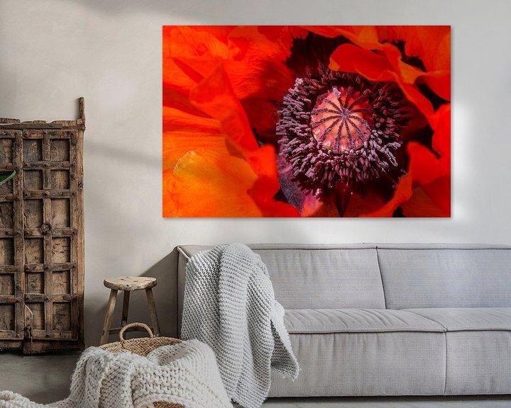 Impression: Rode klaproos, Papaver orientale  sur 7Horses Photography