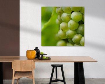 Groene verleiding. Deze sappige druiven in Duitsland groeiende in de Moesel worden later vast een le