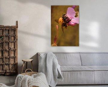 Bij op een bloem von Sanne van der Valk