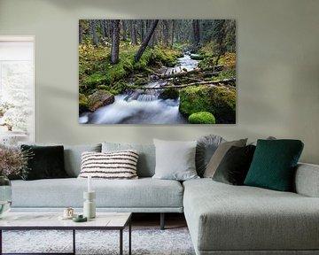 Wald und Fluss in Kanada von Joris Beudel