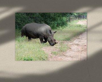 een rhino steeks de weg over van Compuinfoto .