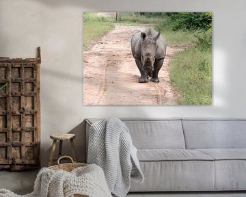 een rhino komt achter de auto aan tijdens een safari van Compuinfoto .