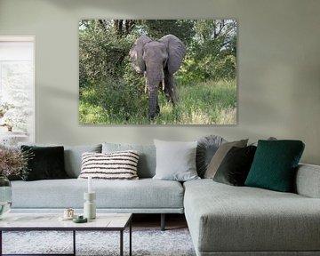 olifant in het wild