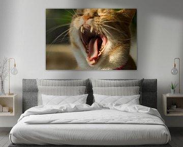 Het leven als kat is ook vermoeiend. Rode kater Europesche korthaar gapend von noeky1980 photography