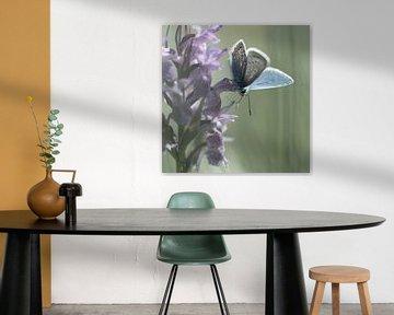 Orchids and blue van jowan iven
