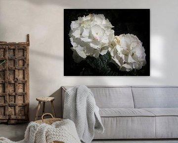 Witte Hortensia van Nicky`s Prints