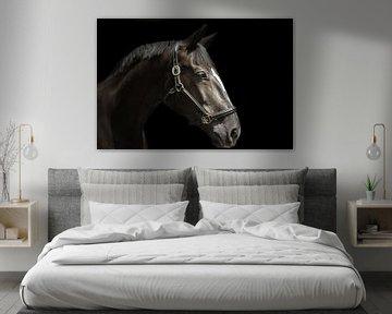 Paardenportret in zwart van san image