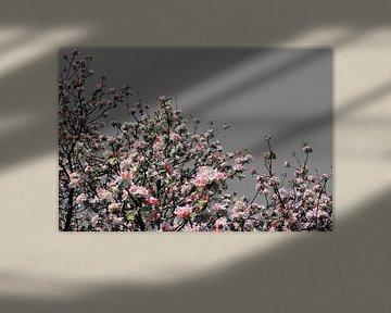 pink blossom von Yvonne Blokland