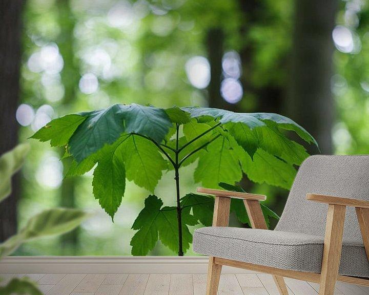 Sfeerimpressie behang: Natuurlijke parasol in bos (groei jonge boom) van Tot Kijk Fotografie: natuur aan de muur