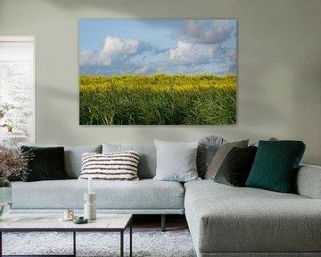 Blauw, geel en groen (2). van Bas Smit