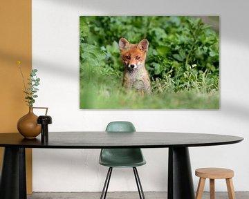 jonge rode vos van gea strucks