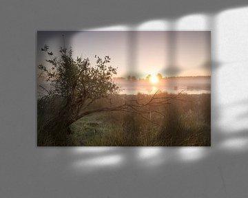 Strabrechtse Heide 214 van Deshamer