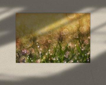le soleil du matin et la rosée sur Daniela Beyer