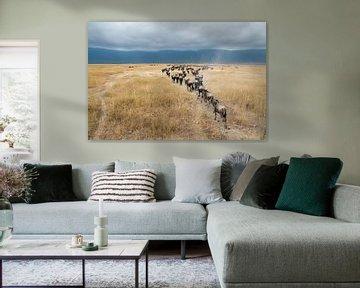 Gnu ou gnous dans la savane africaine sur Herman van Ommen