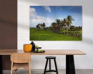 Terrasvormig rijstveld in het oogstseizoen in Bali, Indonesië van Tjeerd Kruse