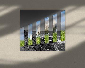 Texels schaap von Arie-Jan Eelman