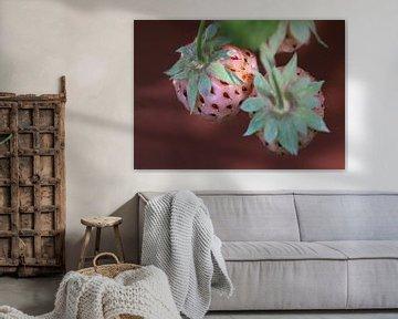 Weisse Erdbeeren van Roswitha Lorz