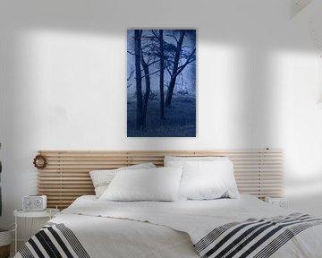 Wald im Nachtlicht sur Roswitha Lorz