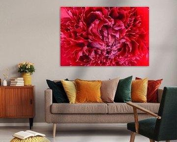 Rode pioen von Barbara Brolsma