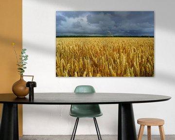 Graanveld met grijze lucht van Michel van Kooten