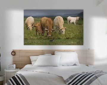 nieuwsgierige koeien van anja voorn
