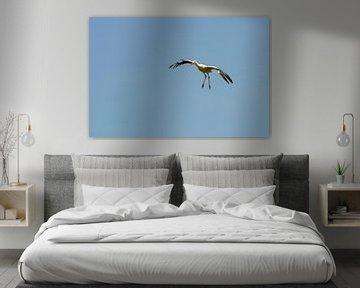 Stork von Barbara Brolsma