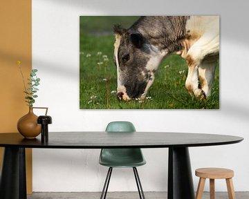 Grazende koe van Menno Schaefer