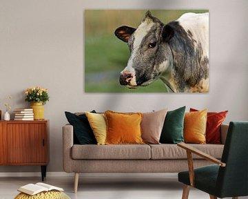 Bonte koe von Menno Schaefer