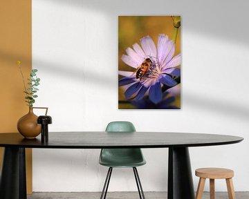 Wesp opzoek naar nectar van Assia Hiemstra