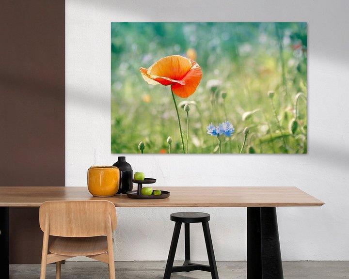 Sfeerimpressie: Klaproos in blauwgroen veld van Arja Schrijver Fotografie