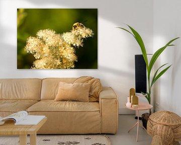 Wesp op een wollige bloem van Frank Hoekzema