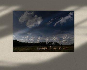 Kudde koeien op de heide, Strijbeek, Strijbeekse heide, Noord-Brabant, Holland, Nederland afbeelding von Ad Huijben