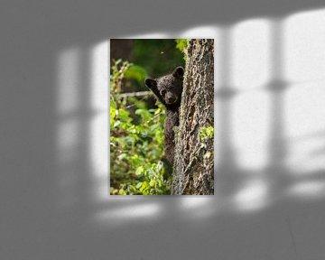 Zwarte beer jong van Menno Schaefer