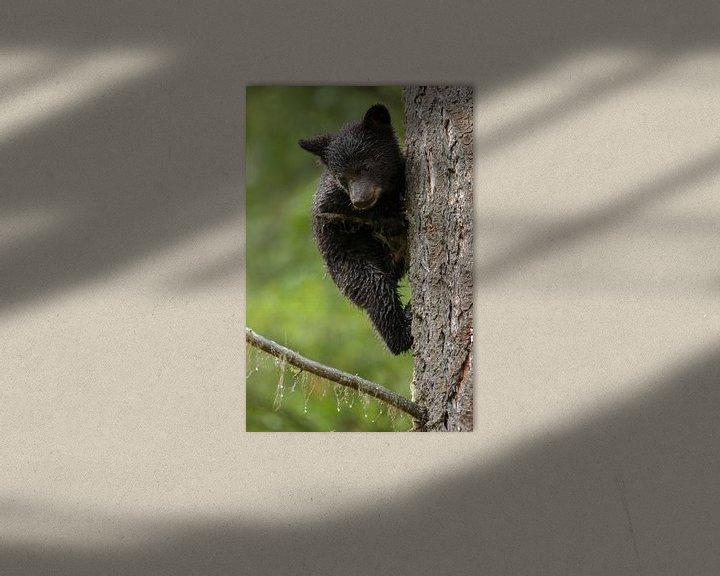 Sfeerimpressie: Klimmende zwarte beer jong van Menno Schaefer