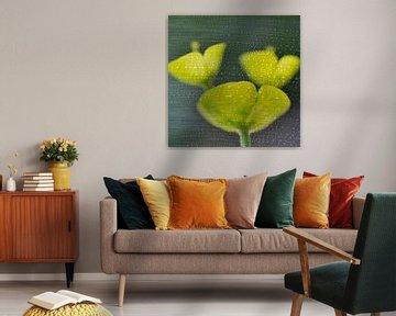 Corolles végétales van Martine Affre Eisenlohr