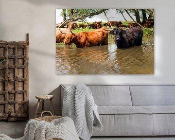 Schotse Hooglanders in het water van Fotografie Arthur van Leeuwen