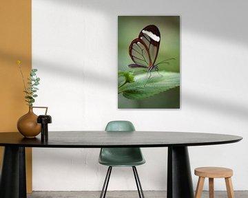 Glasvlinder von Jan van der Knaap
