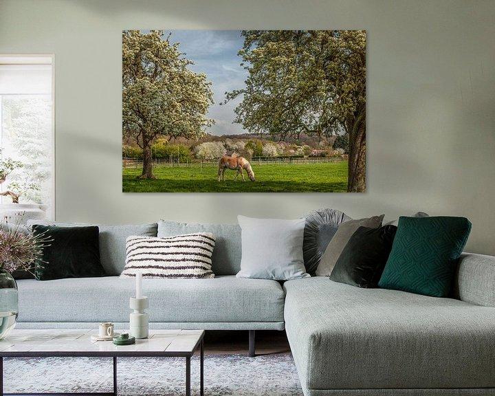 Sfeerimpressie: Limburgse hoogstamboomgaarden in bloei van John Kreukniet