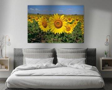The Sunflower van Cornelis (Cees) Cornelissen