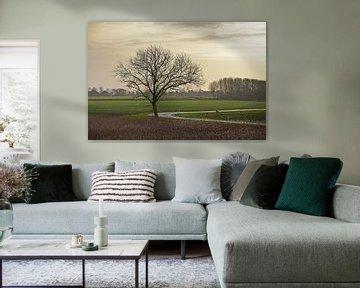 Groningse boom van Frans Blok
