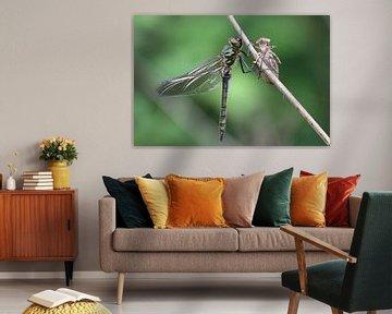 Smaragdlibel von Hans Hendriks