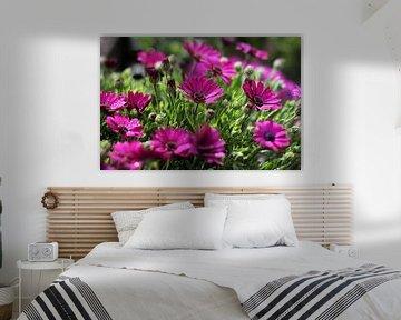 The Purple Daisies van Cornelis (Cees) Cornelissen