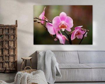 The Purple Orchidee van Cornelis (Cees) Cornelissen